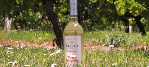 augey_blanc_photo_vignoble_recadre_web